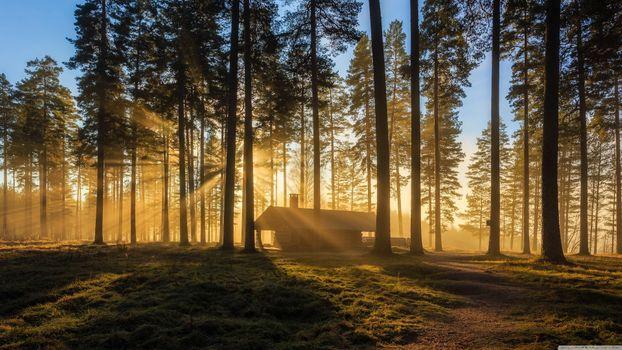 Солнечный свет пробивается сквозь деревья