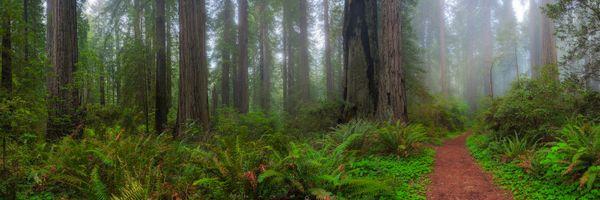 Бесплатные фото лес,деревья,тропинка,панорама,природа,туман,дорога