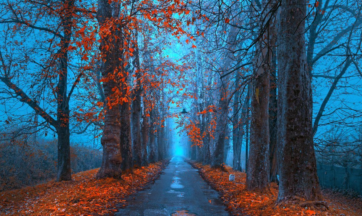Фото бесплатно осень, дорога, рассвет, туман, аллея, деревья, пейзаж, пейзажи