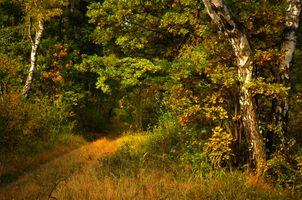 Тропинка в густой лес