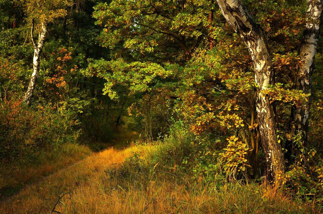Тропинка в густой лес · бесплатное фото