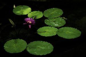 Фото бесплатно цветок, листья, черный фон