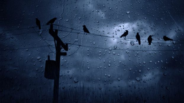 Birds on electrical wires in the rain