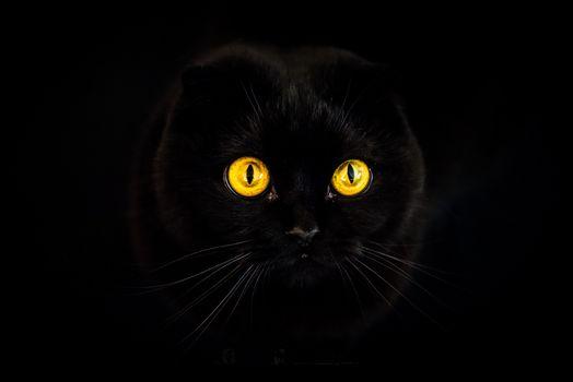 Бесплатные фото чёрный кот,чёрная кошка,чёрный фон,глаза,темнота,горят,морда,животное