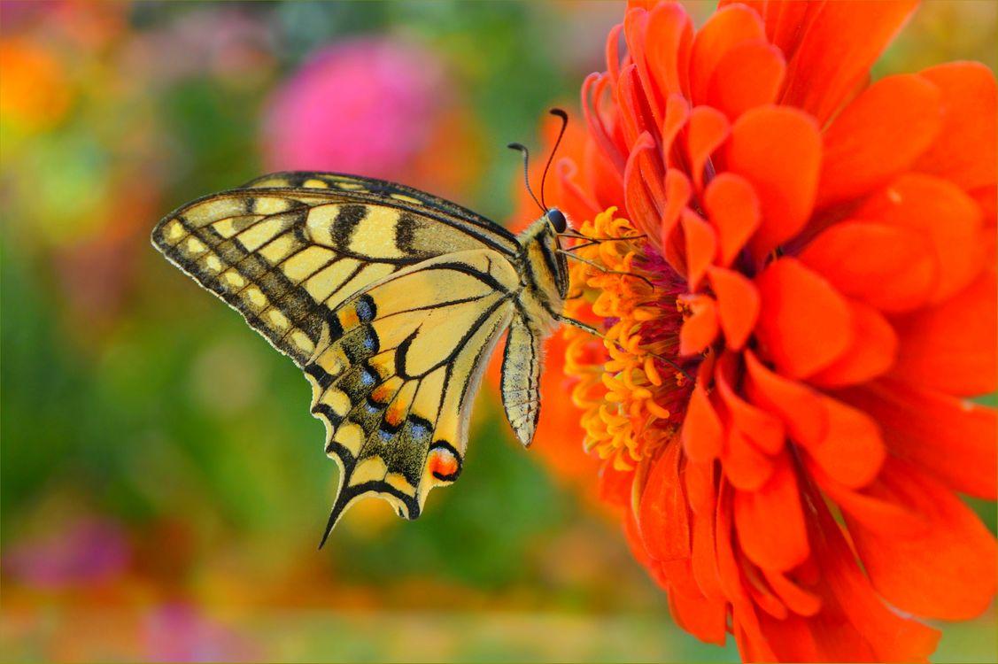 Фото бесплатно природа, бабочка, макро - на рабочий стол