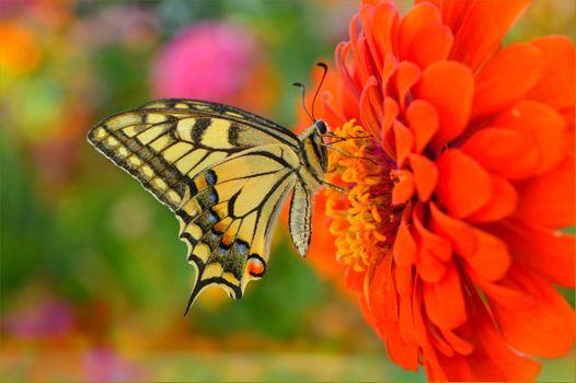 Photo free nature, butterfly, macro