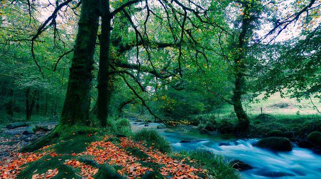 Бесплатные фото осень,река,деревья,осенние листья,природа,пейзаж