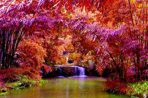 Заставки осенние цветы, водопад, пруд