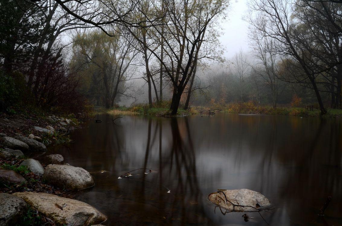 Фото бесплатно осень, туман, лес, озеро, камни, мрачный день, сырость, пруд, пейзажи - скачать на рабочий стол