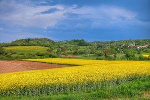 Бесплатные фото поле,поля,цветы,холмы,деревья,дома,пейзаж