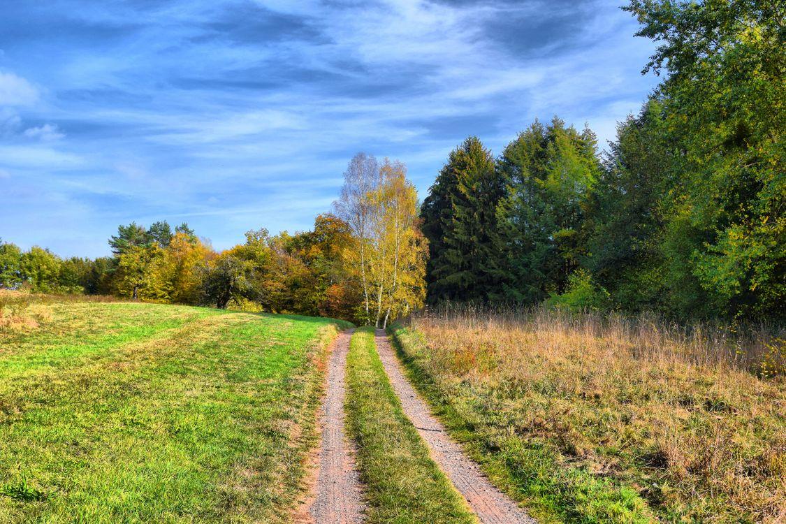 Фото бесплатно поле, дорога, трава, лес деревья, природа, осень, небо, пейзаж, пейзажи - скачать на рабочий стол