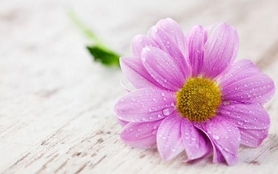 Photo free drops, flower, water