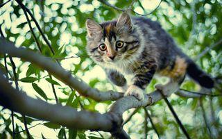 Бесплатные фото котенок,ветка,дерево,листья,взгляд