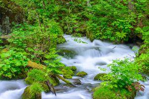 Бесплатные фото лес, деревья, камни, речка, водопад, природа