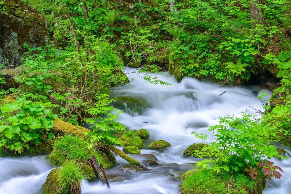 Фото бесплатно лес, деревья, камни, речка, водопад, природа, природа