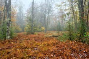 Заставка туман, деревья на монитор