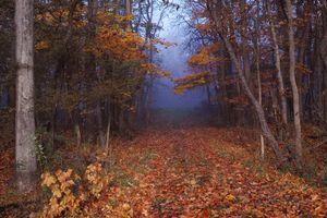 Заставки туман, осенние листья, пейзаж