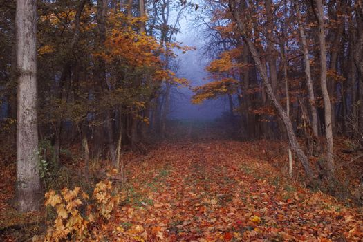 Photo free fog, autumn leaves, landscape