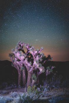 Бесплатные фото ночь,звезды,обои,галактики,путешествия,неон,цветная подсветка,неоновый свет,свет,природа,пейзаж,дерево Джошуа