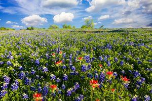Заставки цветы, пейзаж, цветение