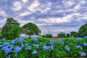 Бесплатные фото поле дом,деревья,гортензии,небо,облака,цветы,пейзаж