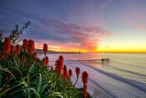 Бесплатные фото San Diego Sunset,закат,море,берег,цветы,пейзаж