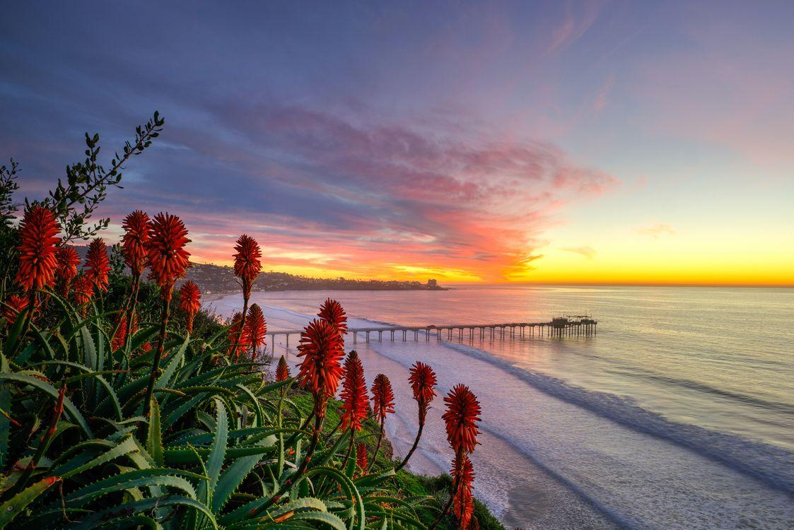 Фото бесплатно San Diego Sunset, закат, море, берег, цветы, пейзаж, пейзажи
