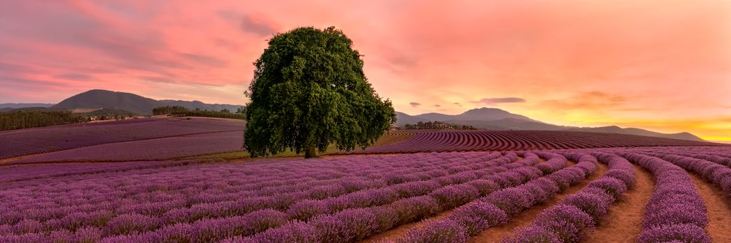 Photo free Tasmania, Australia, field