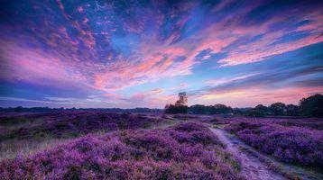 Бесплатные фото лавандовое поле, закат солнца, красивое небо, поле, лаванда, цветы, тропинка