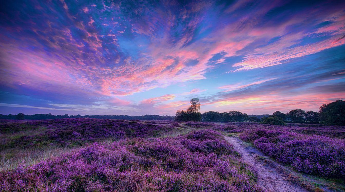 Обои красивое небо, путь, лавандовое поле картинки на телефон