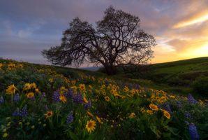 Дерево посреди цветов люпин