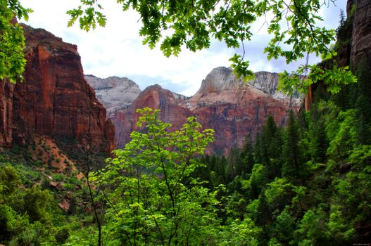 Фото бесплатно ветви, горы, природа
