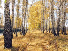 Фото бесплатно лес, осень цвета, парк