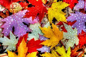 Фото бесплатно капли, природа, осенняя листва