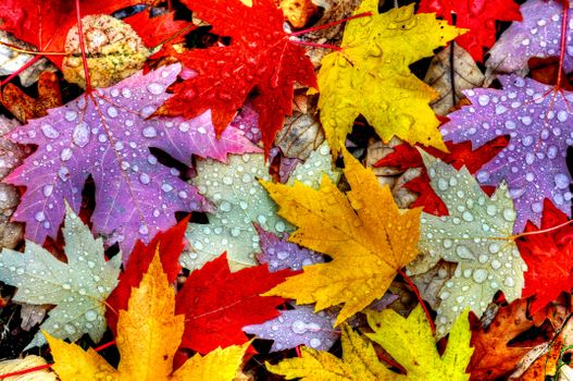 Photo free drops, nature, autumn foliage