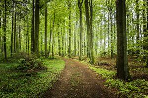 Заставки лес, на лесной тропе, тропинка