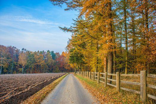 Photo free nature, arable land, trees