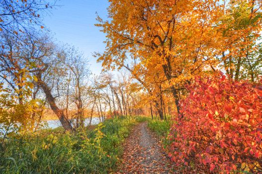 Into the woods come fall · free photo
