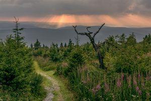 Бесплатные фото Саксония,горы,Фихтельберг,Германия,деревья,тропинка,закат