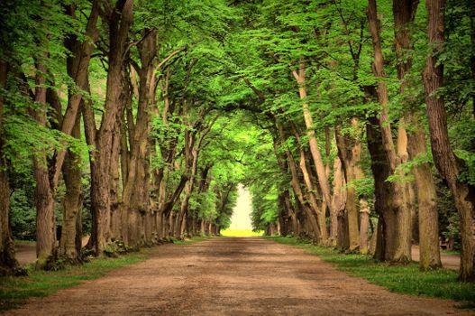 Фото бесплатно пейзаж, красиво, зелень