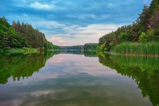 River in a forest · free photo