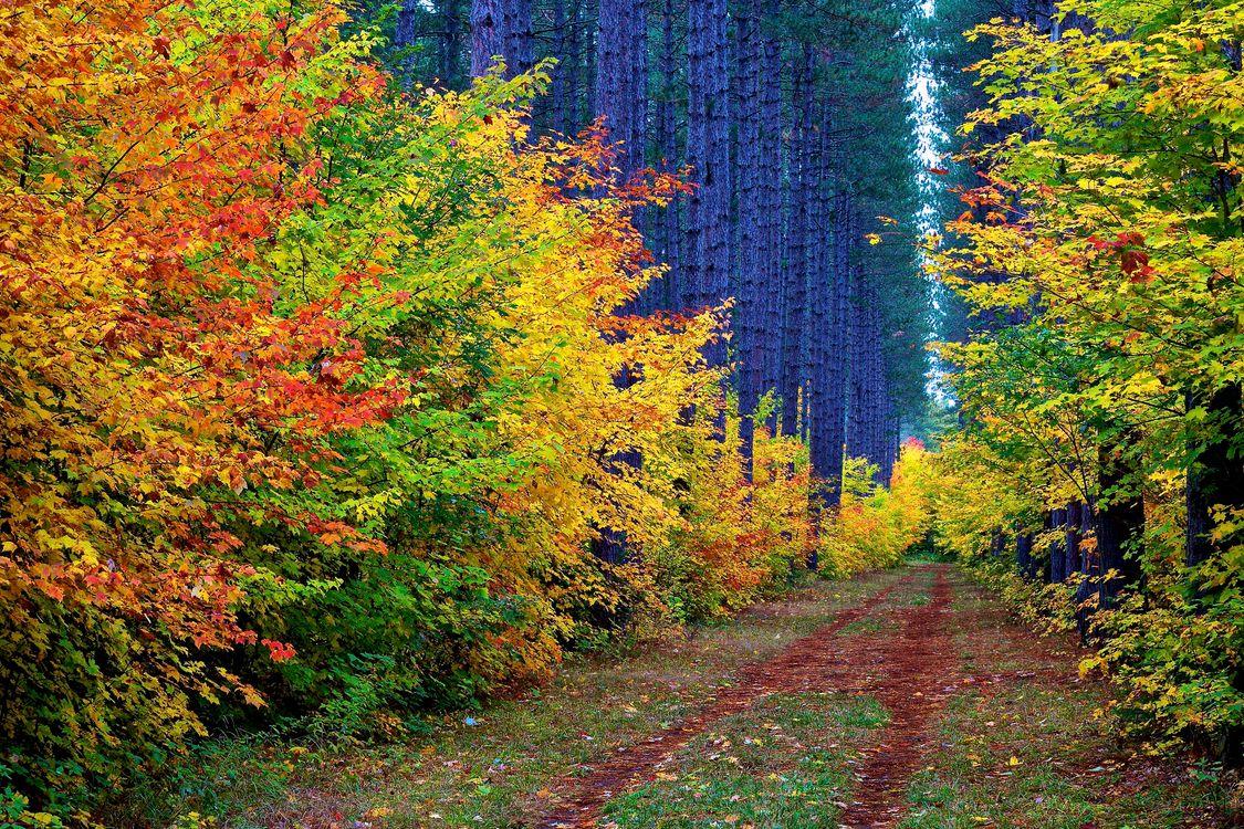 лесная дорога · бесплатное фото