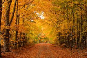 Заставки осень, лес, дорога деревья природа осенние краски
