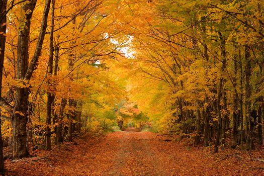 Заставки осень, лес, дорога деревья природа осенние краски, осенние листья, пейзаж