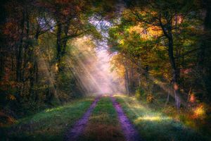 Фото бесплатно солнечный свет, пейзаж, осень