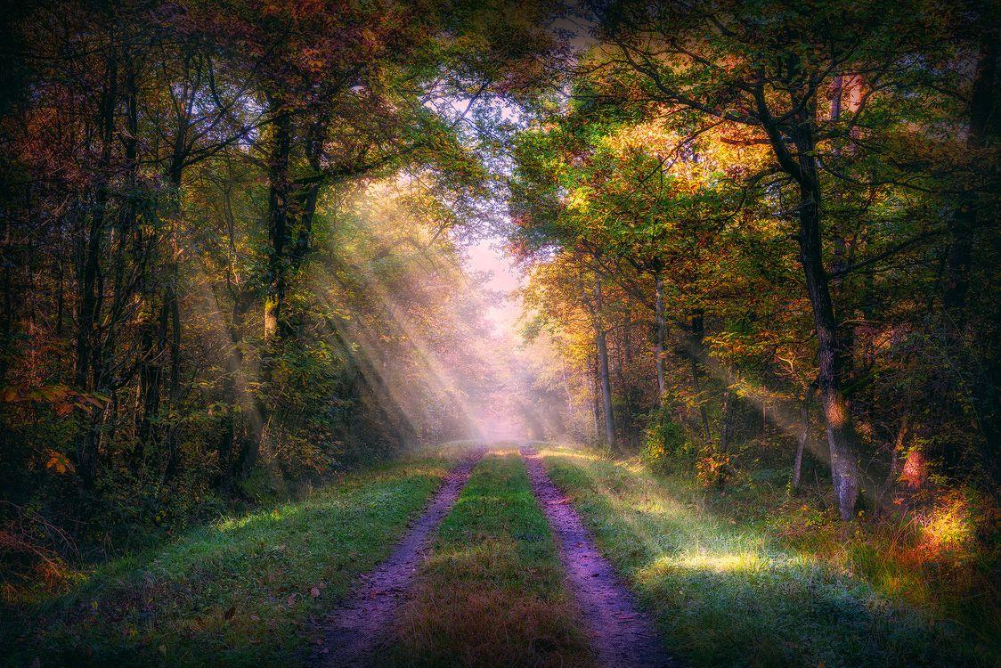 Фото бесплатно осень, лес, дорога, деревья, туман, природа, солнечные лучи, пейзаж, пейзажи