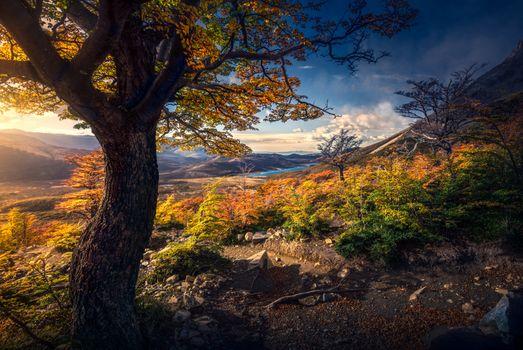 Golden autumn in the mountains · free photo
