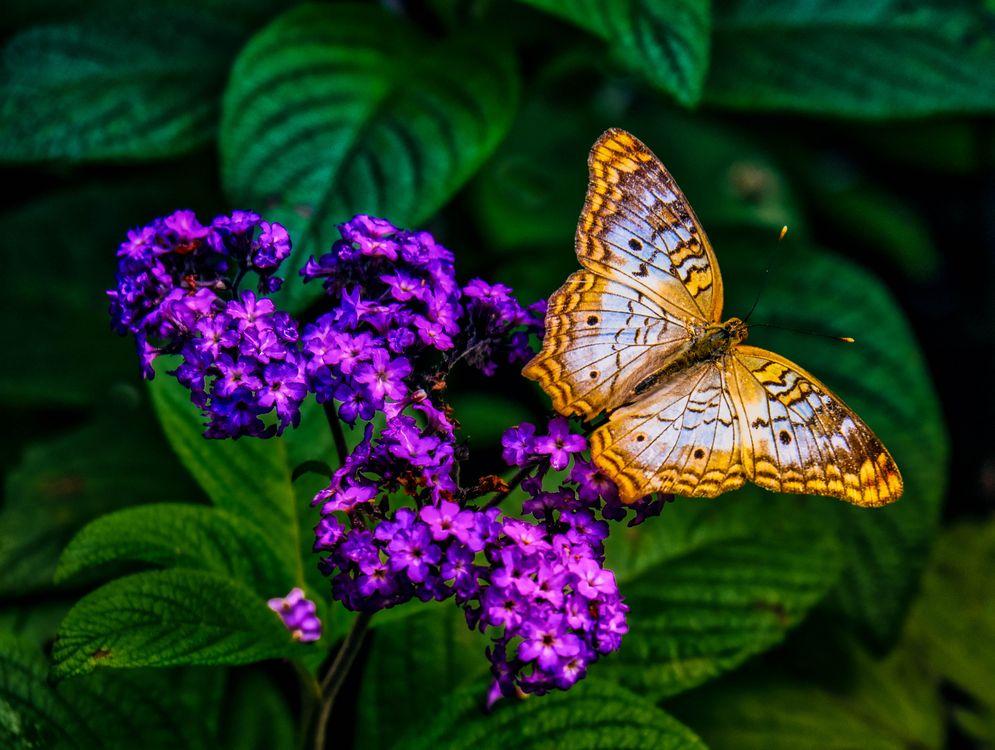 Фото бесплатно природа, цветок, насекомое - на рабочий стол