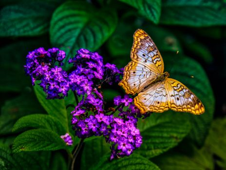 Заставки бабочка,на цветке,цветок,макро,насекомое,природа