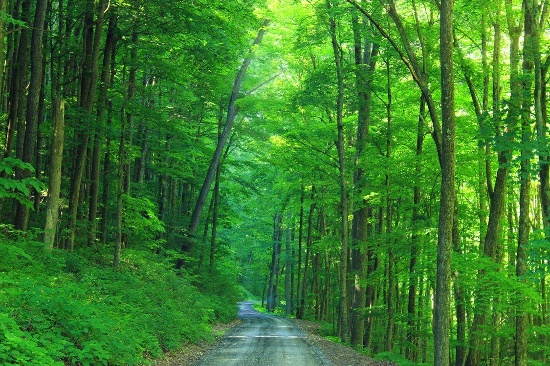 Обои дорога, овраг, зелень картинки на телефон